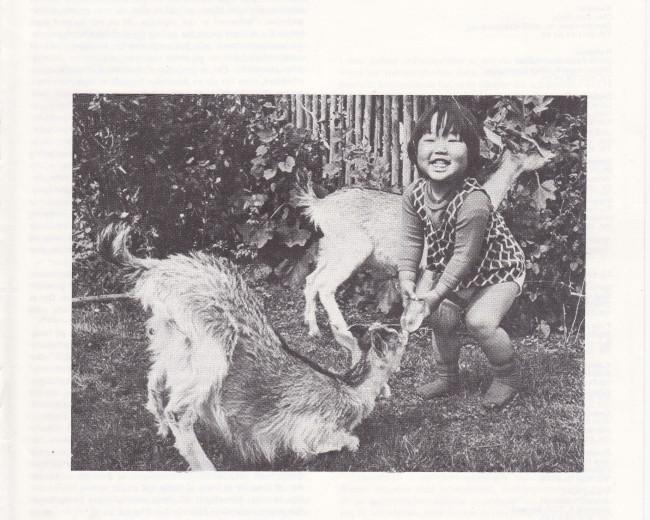 Adoption og Samfund, årgang 3, nr. 3 (1979)